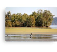 Heron at Brush Creek Canvas Print