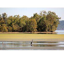 Heron at Brush Creek Photographic Print