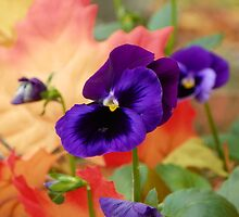 Pretty Purple Flower by David  Hughes
