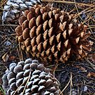 Pinecones by Anne McKinnell