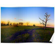 purple flower path sunset Poster