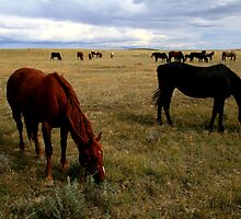 """  Open Range  "" by fortner"