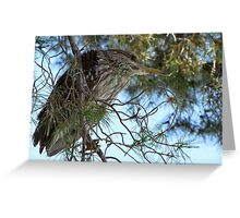 Black-Crowned Night Heron ~ Juvenile Greeting Card