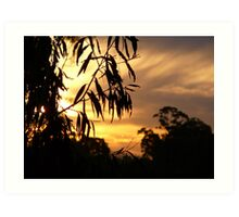 Bush Sunset on the Tweed River. Art Print