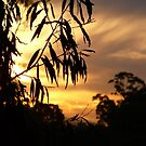 Bush Sunset on the Tweed River. by aussiebushstick