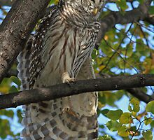 Kinesthetics - Barred Owl Style ;) by Bill McMullen