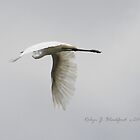 Egret in Flight by aussiebushstick