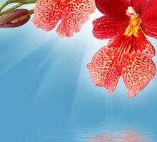 Orchid - 14 Sticker