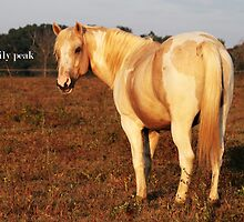 Palomino Paint by Emily Peak