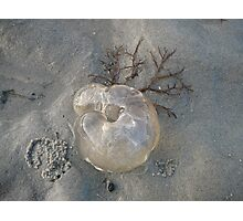 Jelly Fish Art, Tweed Heads Photographic Print