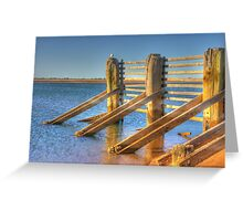 Seagull sitting on Tide fence Greeting Card