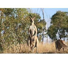 Big Roo Watching Me Photographic Print