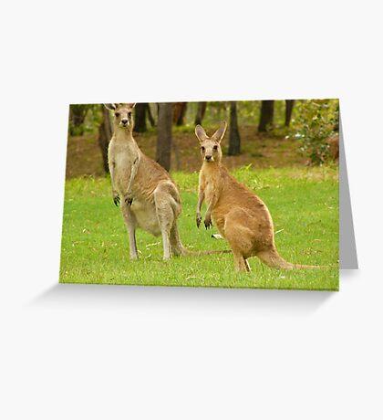 visiting kangaroos Greeting Card