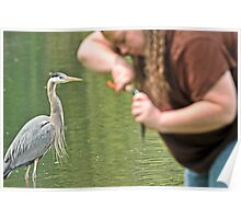 Great Blue Heron and Great Big Fishing Lady Poster