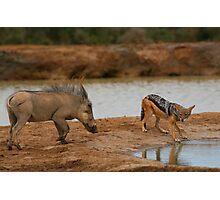 Warthog Versus Jackal Photographic Print