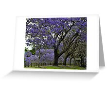 jacarandas in bloom Greeting Card