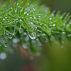 Green by Stecar