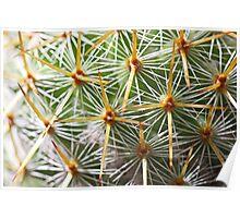 Cactus needles Poster