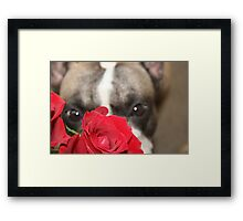 Smell The Roses Framed Print