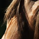 Stallion Eye by Sue Ratcliffe