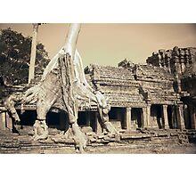 Preah Khan Tree Photographic Print