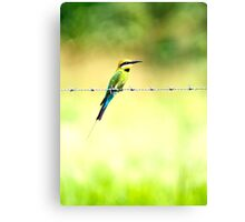 Bird on a wire - bee eater Canvas Print