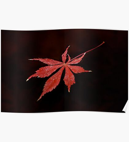 Autumn Water  Poster