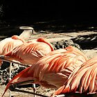 Sleeping Flamingos by DDLeach