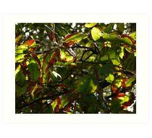 Leaves in May, Tweed River, NSW Art Print