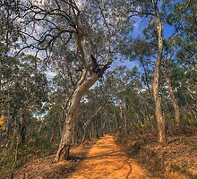 Along The Track- Central West, NSW Australia (20 Exposure HDR) - The HDR Experience by Philip Johnson