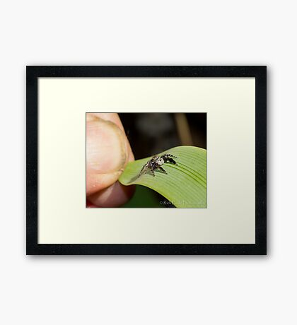 Hello Little Friend Framed Print