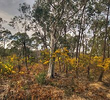 Gum Tree Garden - Central West, NSW Australia (20 Exposure HDR) - The HDR Experience by Philip Johnson