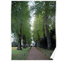an avenue of trees Poster