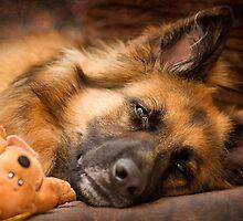 Bedtime by grannyshot