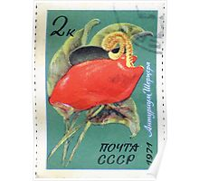 Tropical and subtropical plants Soviet Union stamp series 1971 CPA 4081 stamp Anthurium scherzerianum cancelled USSR Poster
