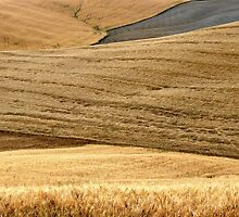 Tuscan Summer Wheat-Siena by Deborah Downes