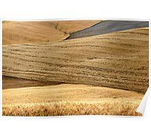 Tuscan Summer Wheat-Siena Poster