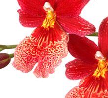Orchid - 52 Sticker
