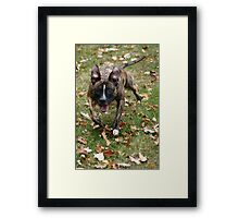 Oh what's that! Framed Print