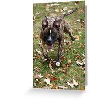 Oh what's that! Greeting Card