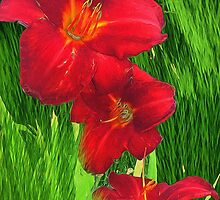 Red lilies Green Grass by bloomingvine