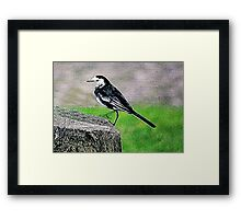 Fractalius Pied Wagtail Framed Print