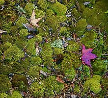 Redish Leaf on the Moss by Gordon Taylor