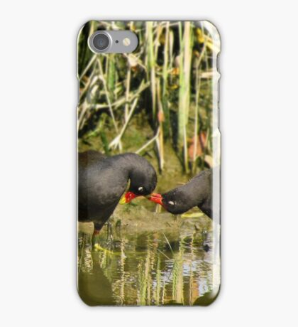the sweetness and love of a pair of moorhens iPhone Case/Skin