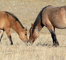 Wild Stallion and Foal touch by sandyelmore