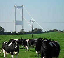Not a Severn bridge pastoral scene  by buttonpresser