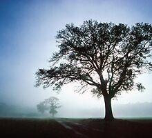 Oaks in the Mist by Geoff Spivey