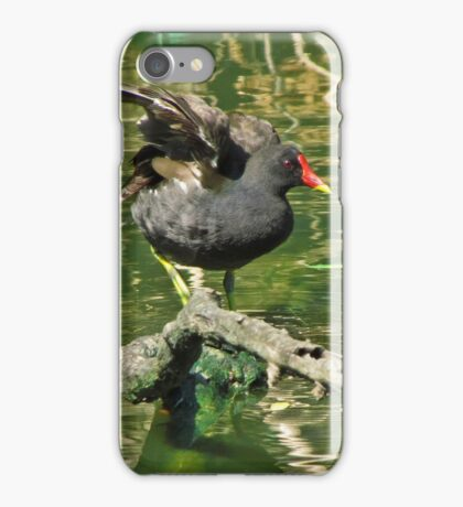 Moorhen on a branch in the river iPhone Case/Skin