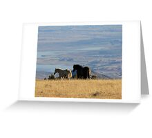 Two Pryor Mountain Wild Horses Enjoying the View Greeting Card