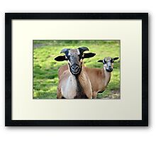Friendly Animals (Saxony, Germany) Framed Print